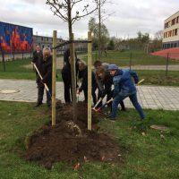 """Wismar hat jetzt einen """"Baum der Jugend"""""""